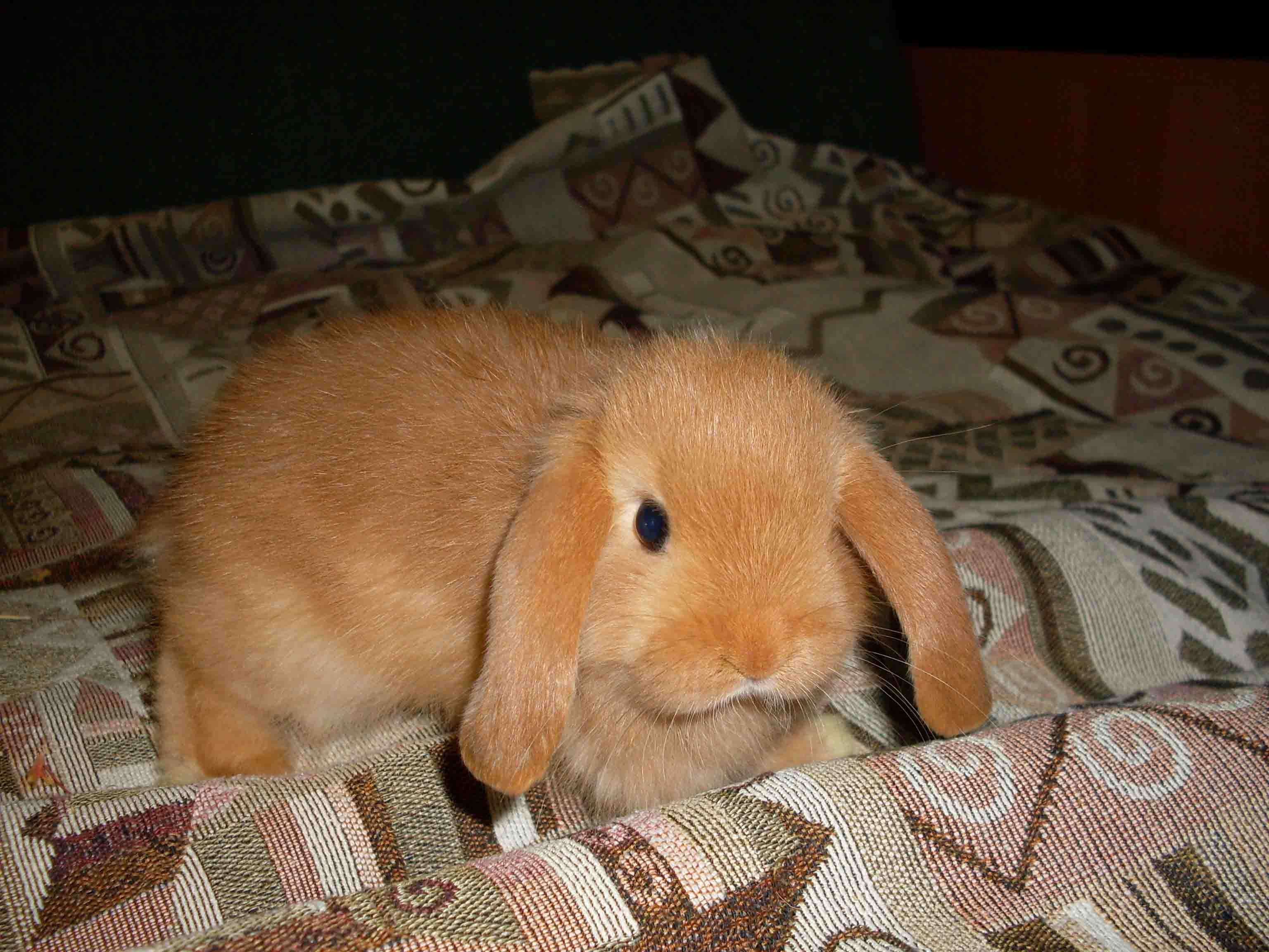 Рахіт у кроликів фото 4 фотография
